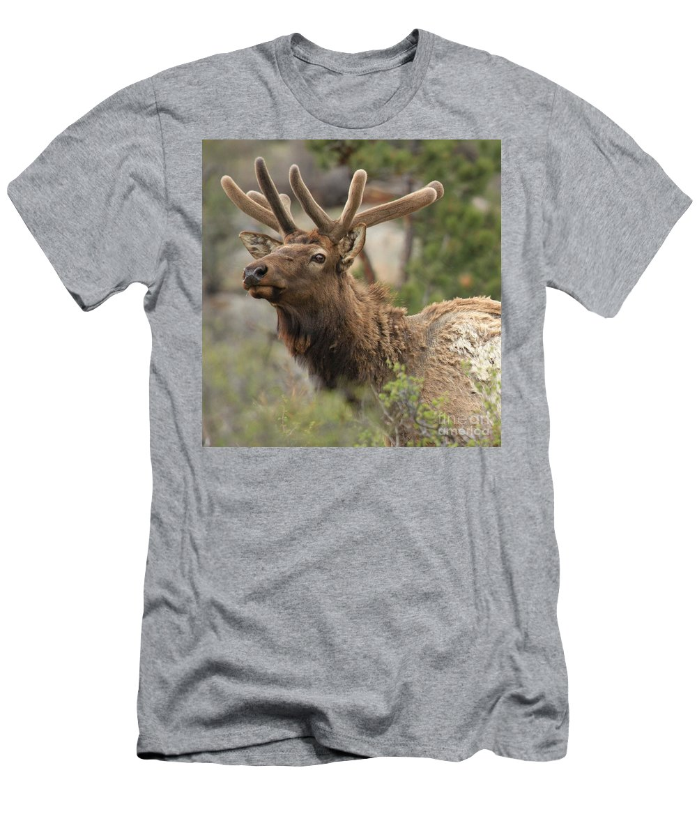 Rocky Mountain National Park Men's T-Shirt (Athletic Fit) featuring the photograph Looking Proud by Adam Jewell