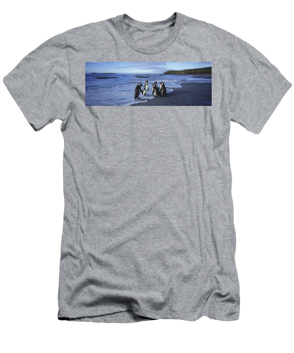 Feb0514 Men's T-Shirt (Athletic Fit) featuring the photograph Magellanic Penguin Trio On Beach by Hiroya Minakuchi