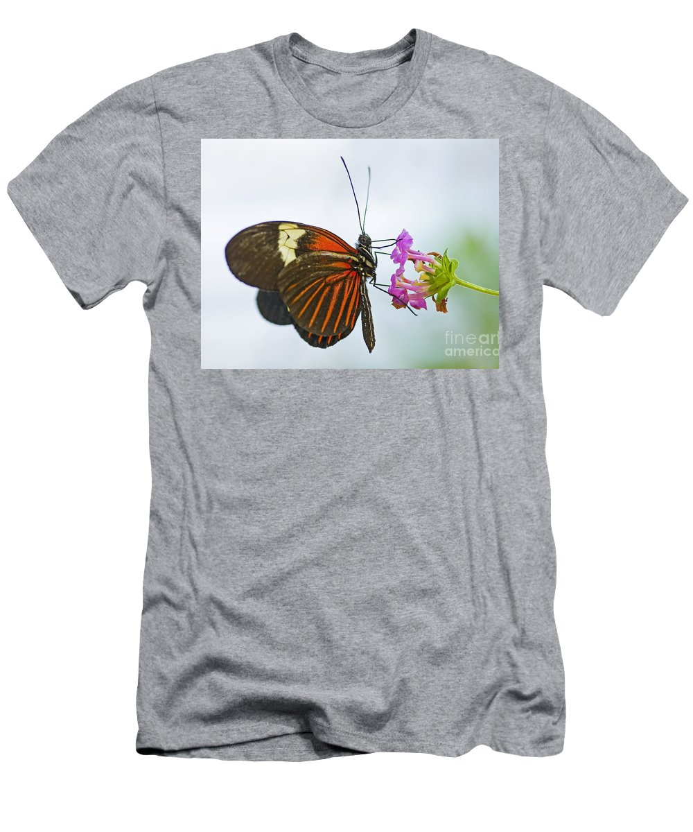 Butterfly Men's T-Shirt (Athletic Fit) featuring the photograph Malay Lacewing by Nick Boren