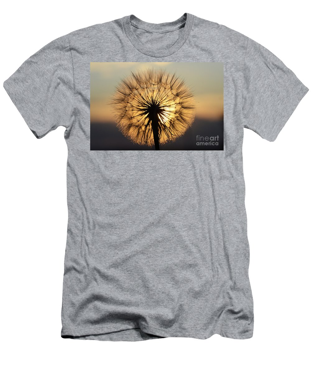 Milkweed Men's T-Shirt (Athletic Fit) featuring the photograph Beauty Of The Dandelion 2 by Bob Christopher