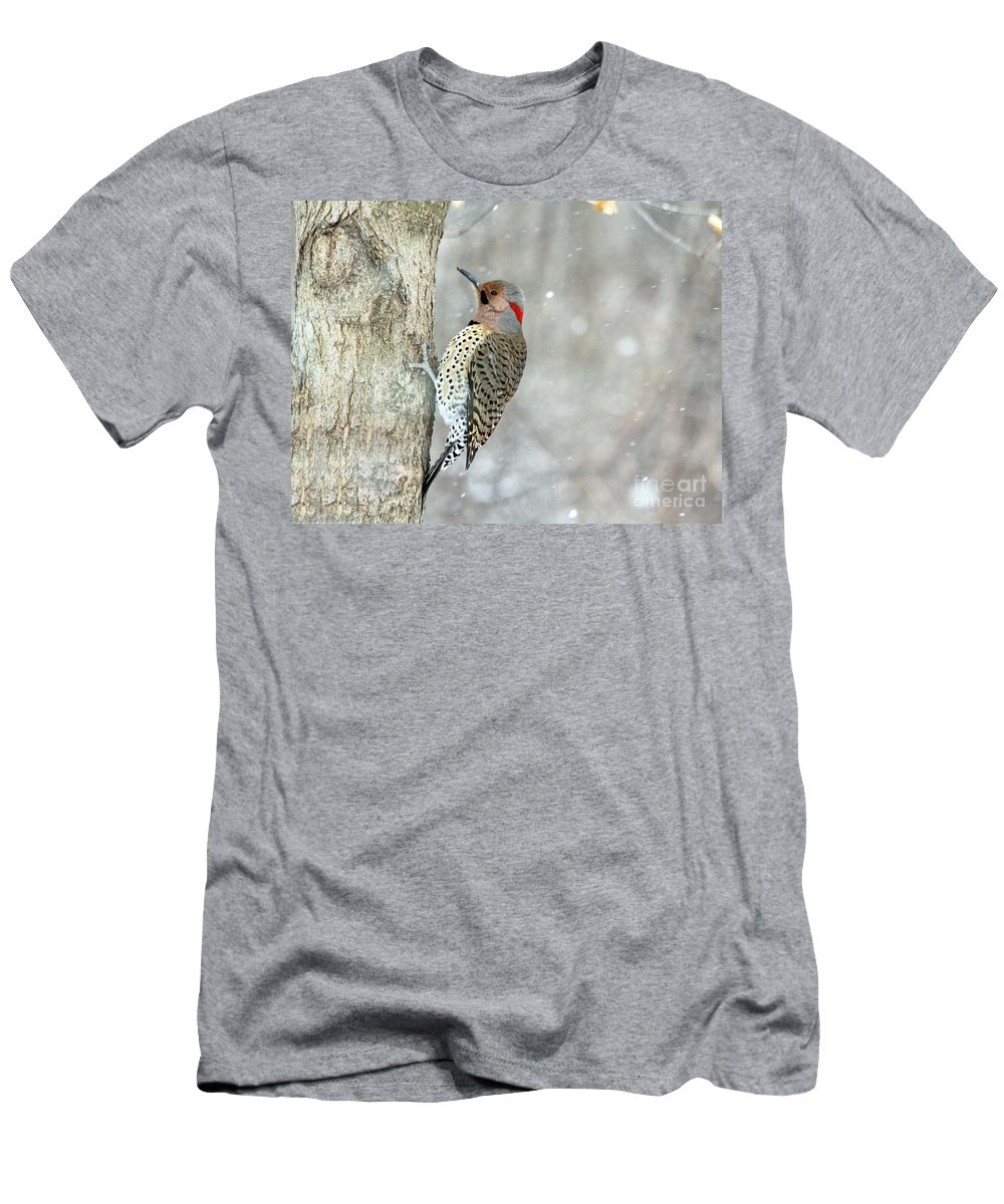 Birds Men's T-Shirt (Athletic Fit) featuring the photograph Northern Flicker Woodpecker by Jack Schultz