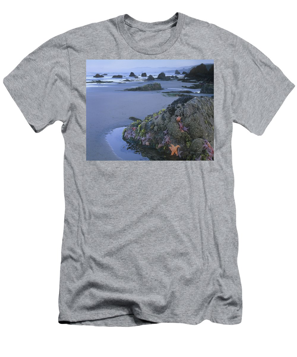 Feb0514 Men's T-Shirt (Athletic Fit) featuring the photograph Ochre Sea Stars At Low Tide Miwok Beach by Tim Fitzharris