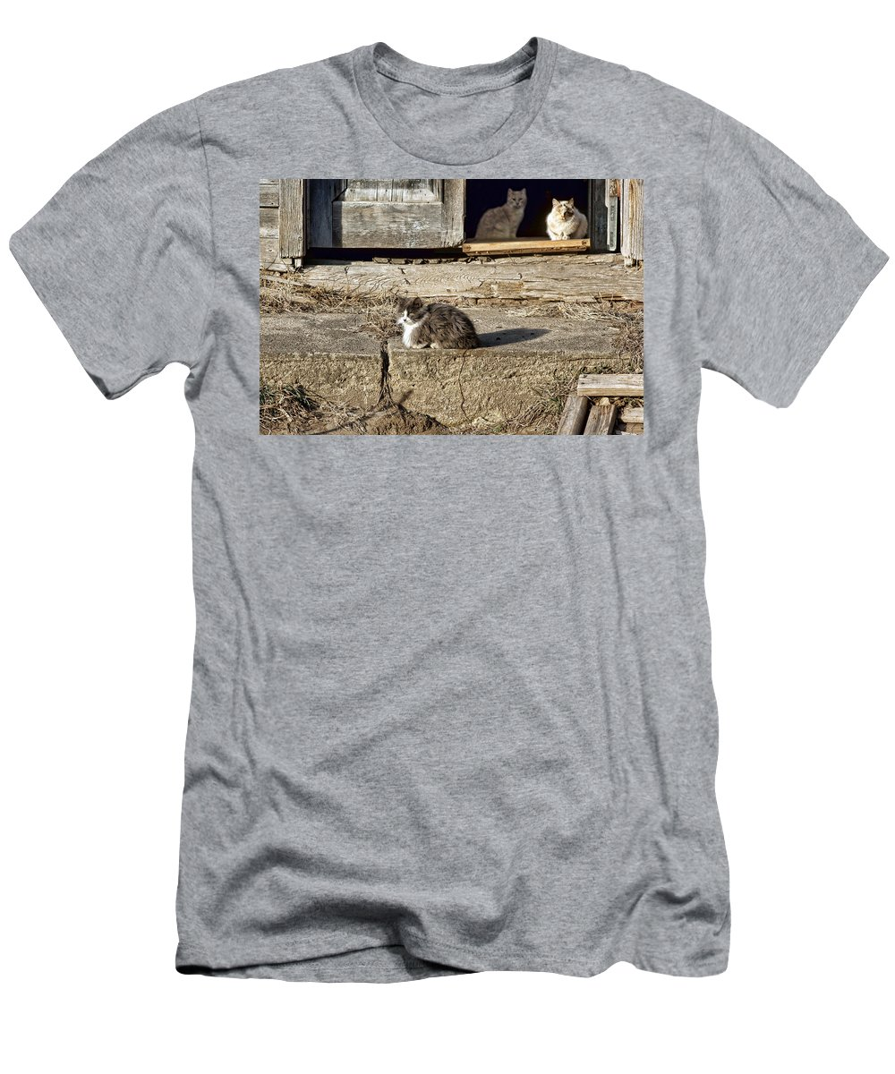 Cat Men's T-Shirt (Athletic Fit) featuring the photograph Old Knox Church Cats #2 by Nikolyn McDonald