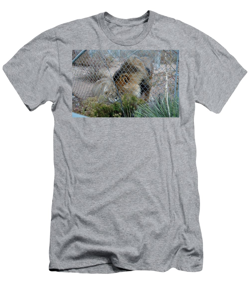 Out Of Africa Men's T-Shirt (Athletic Fit) featuring the photograph Out Of Africa Lions 4 by Phyllis Spoor