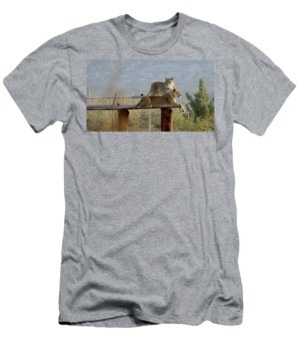 Out Of Africa Men's T-Shirt (Athletic Fit) featuring the photograph Out Of Africa Lions by Phyllis Spoor
