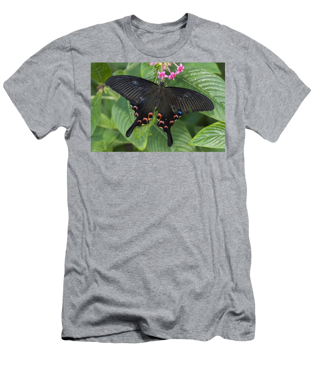 Feb0514 Men's T-Shirt (Athletic Fit) featuring the photograph Peacock Butterfly Arizona by Tom Vezo