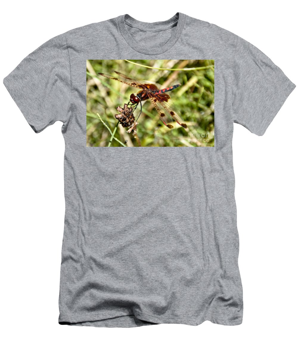 Dragonfly Men's T-Shirt (Athletic Fit) featuring the photograph Perched Dragon by Cheryl Baxter