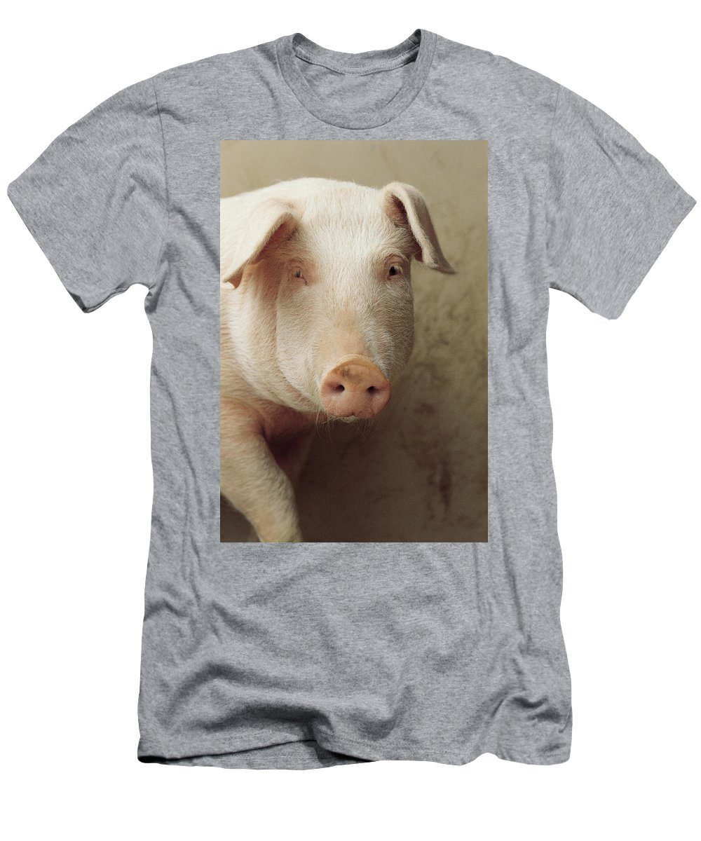 Feb0514 Men's T-Shirt (Athletic Fit) featuring the photograph Pig Portrait by Isao Enomoto