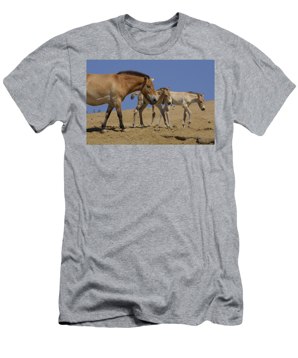 Feb0514 T-Shirt featuring the photograph Przewalskis Horse With Two Foals by San Diego Zoo