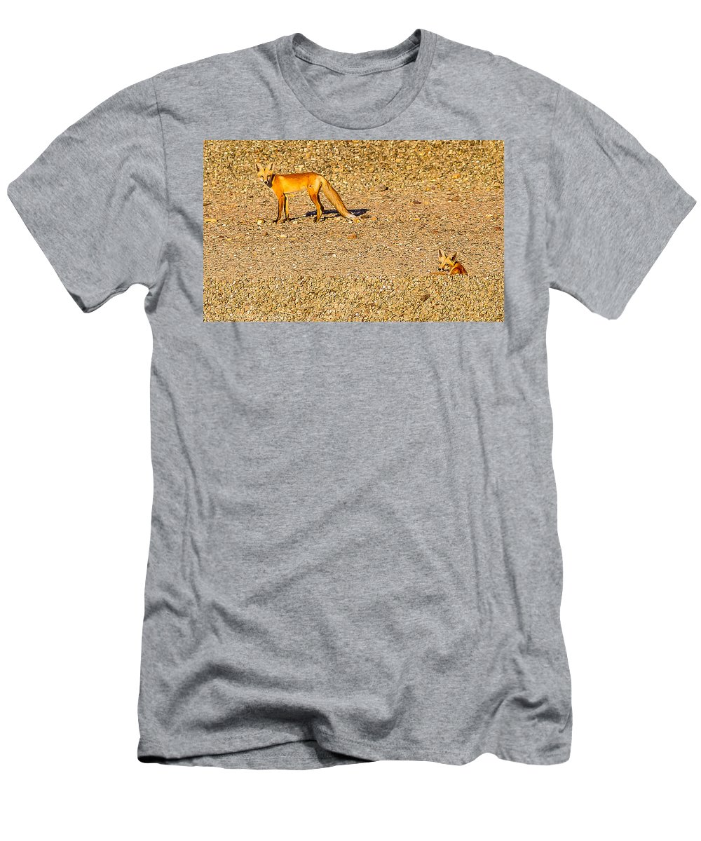 Red Foxes Nature Outdoors Wildlife All Prints Are Available In Prints Men's T-Shirt (Athletic Fit) featuring the photograph Red Foxes by Brian Williamson