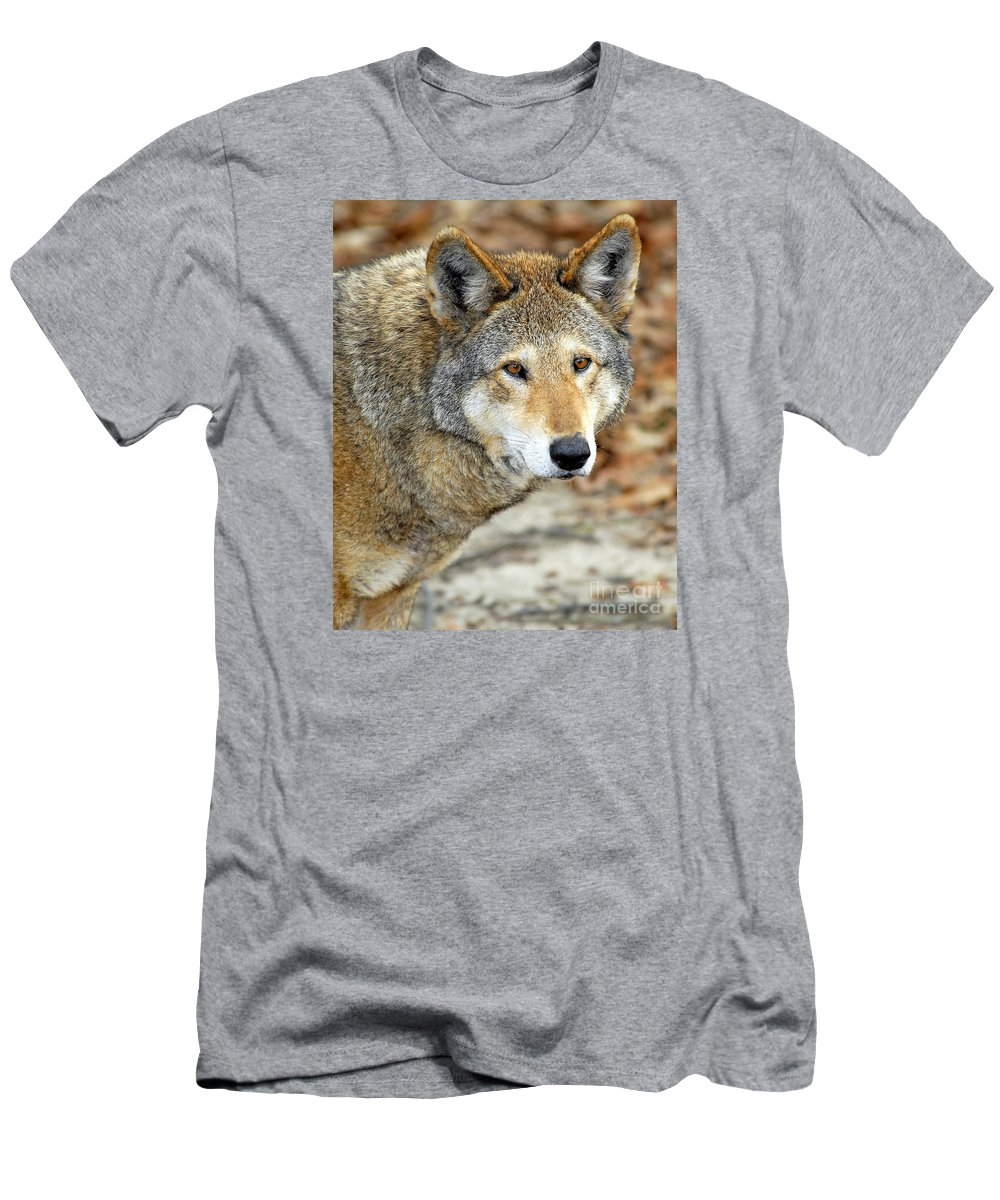Red Wolf Men's T-Shirt (Athletic Fit) featuring the photograph Red Wolf Portrait by Timothy Flanigan