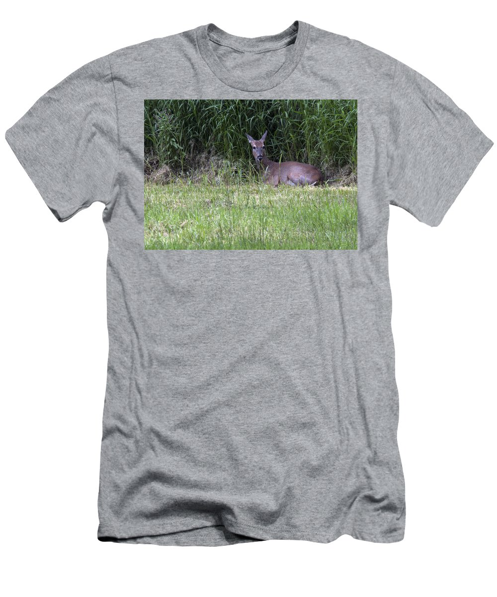 Deer Men's T-Shirt (Athletic Fit) featuring the photograph Resting Doe by Jayne Gohr