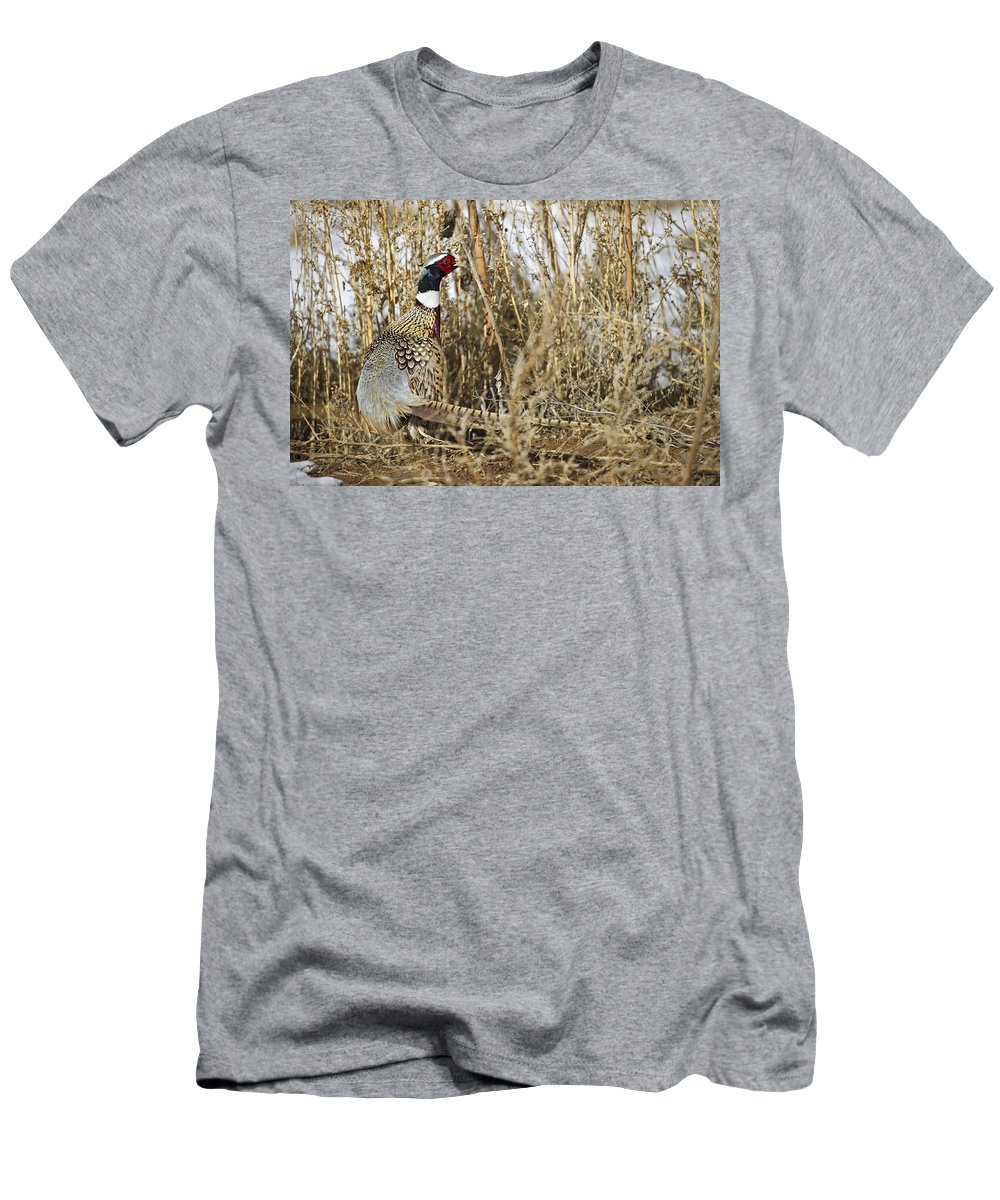 Ringneck Rooster Pheasant Men's T-Shirt (Athletic Fit) featuring the photograph Ring Neck Phesant by Gary Langley