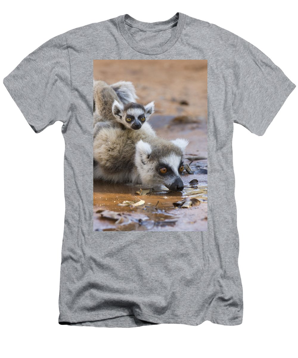 Feb0514 Men's T-Shirt (Athletic Fit) featuring the photograph Ring-tailed Lemur Mother Drinking by Suzi Eszterhas