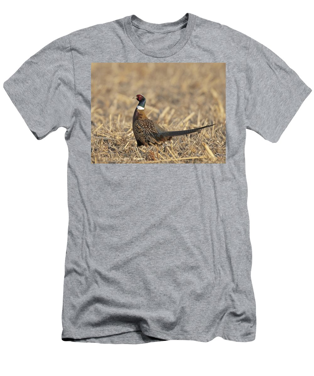 Ringneck Men's T-Shirt (Athletic Fit) featuring the photograph Ringneck Pheasant Rooster by Gary Langley
