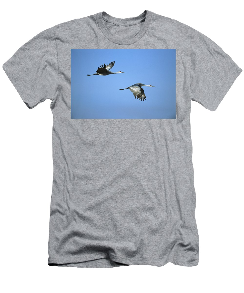 Feb0514 Men's T-Shirt (Athletic Fit) featuring the photograph Sandhill Cranes Flying Bosque Del Apache by Tom Vezo