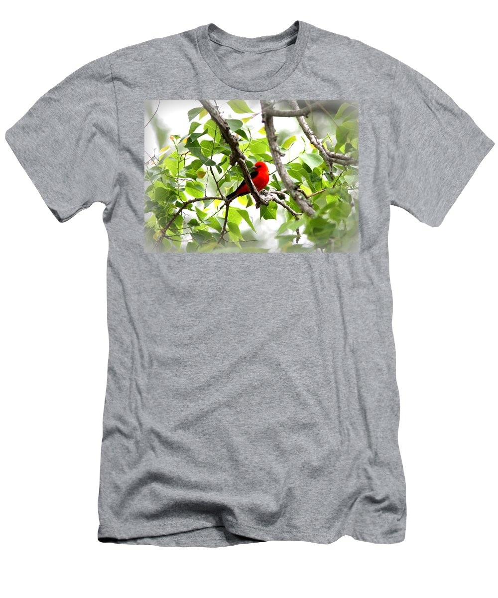 Scarlet Tanager Men's T-Shirt (Athletic Fit) featuring the photograph Scarlet Tanager - 11 by Travis Truelove