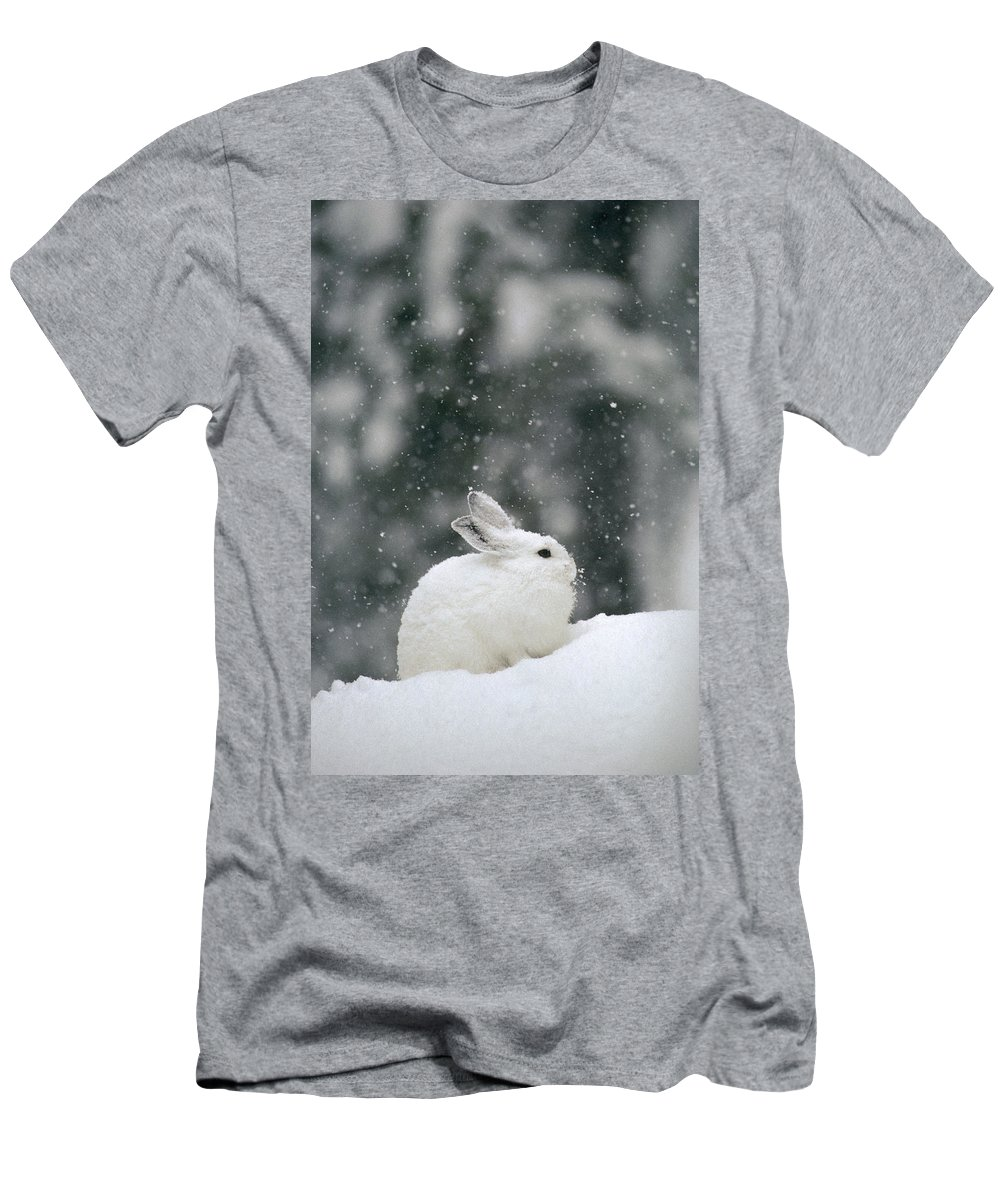 Feb0514 Men's T-Shirt (Athletic Fit) featuring the photograph Snowshoe Hare In Snowfall Yellowstone by Michael Quinton