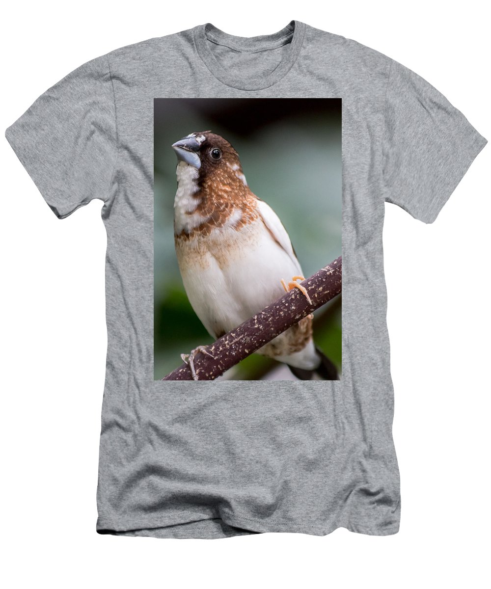 Beak Men's T-Shirt (Athletic Fit) featuring the photograph Society Finch by Gaurav Singh