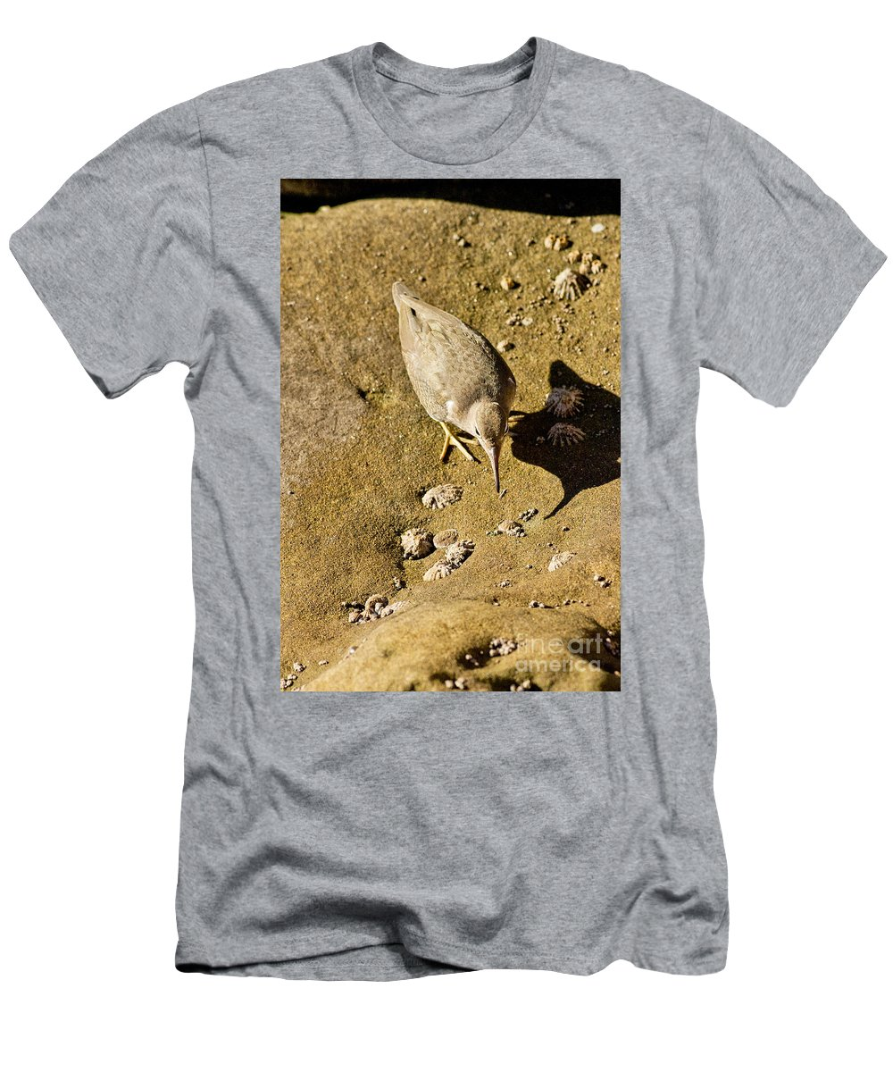 Fauna Men's T-Shirt (Athletic Fit) featuring the photograph Spotted Sandpiper With Fly by Anthony Mercieca