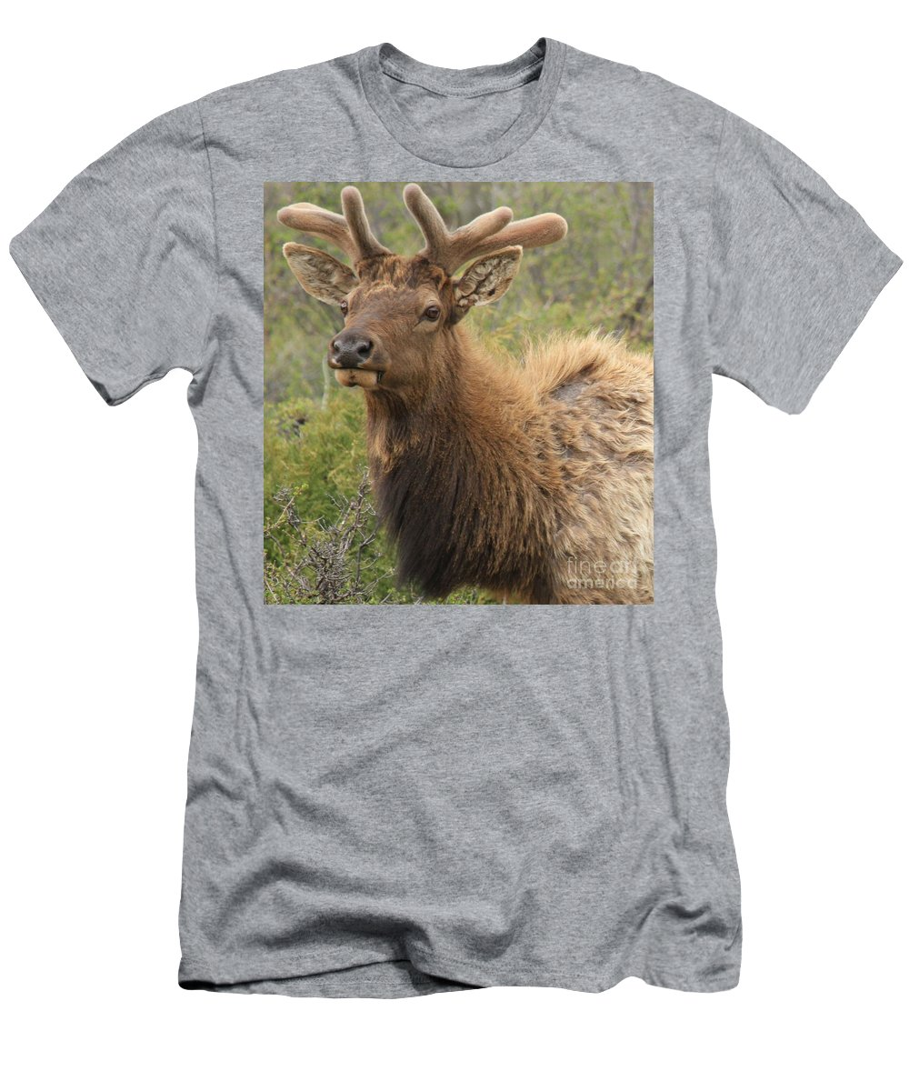 Rocky Mountain National Park Men's T-Shirt (Athletic Fit) featuring the photograph Spring Gaze by Adam Jewell