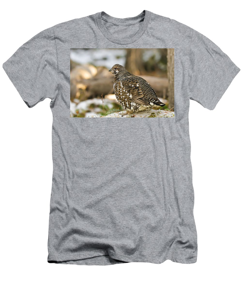 Autumn Men's T-Shirt (Athletic Fit) featuring the photograph Spruce Grouse In The Snow by Brandon Smith