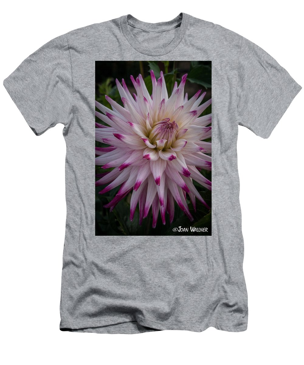 Dahlia Men's T-Shirt (Athletic Fit) featuring the photograph Fireworks Dahlia by Joan Wallner