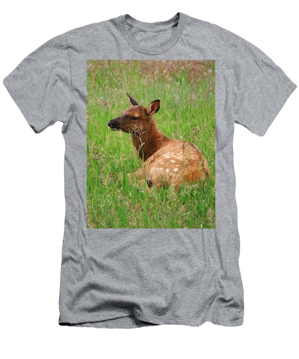 Elk Men's T-Shirt (Athletic Fit) featuring the photograph Summer Baby by Karen Jones