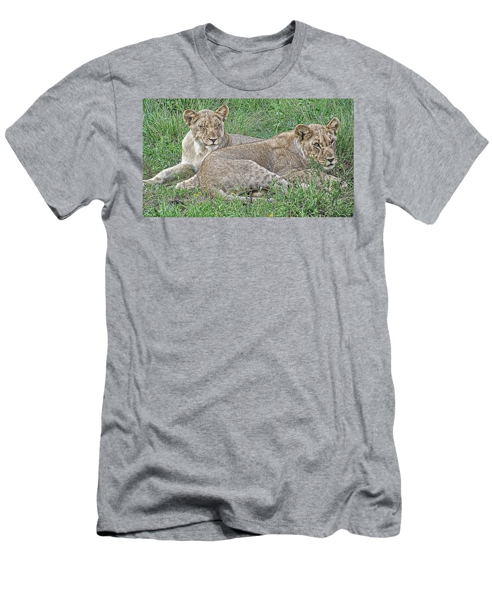 Lioness Men's T-Shirt (Athletic Fit) featuring the photograph Sunday Afternoon Nap by Douglas Barnard