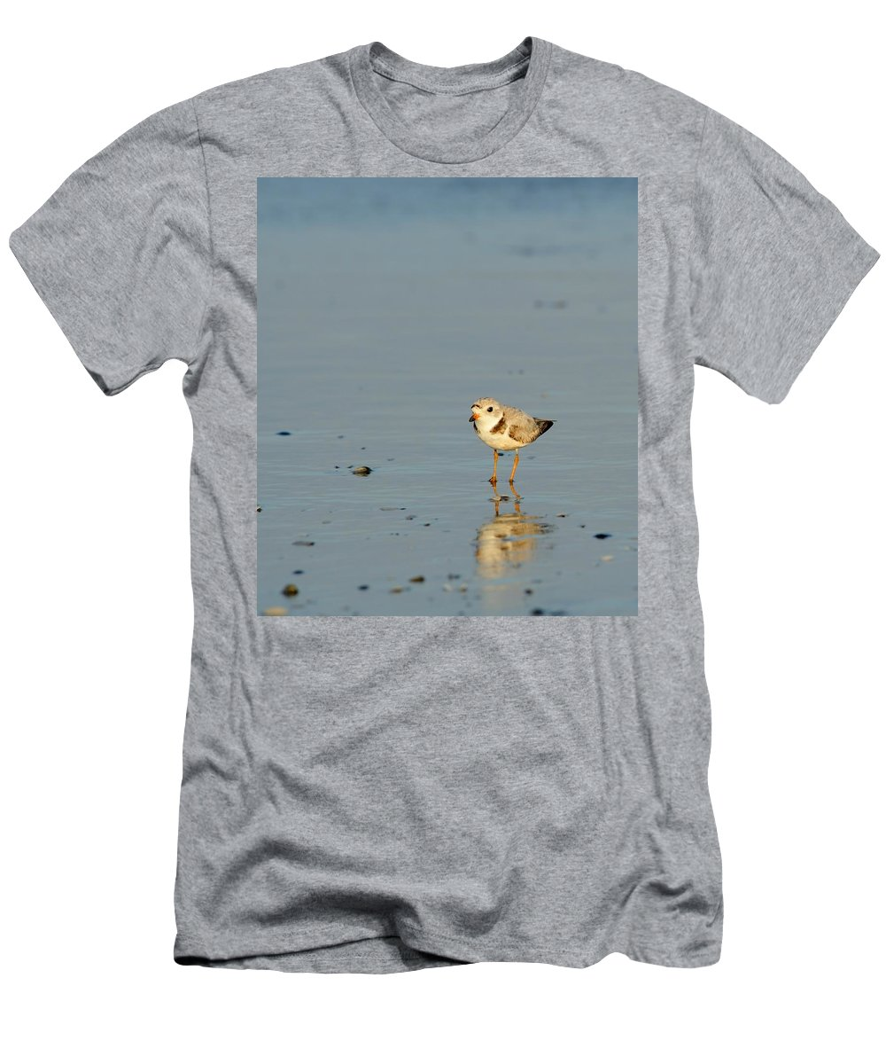 Piping Plover Men's T-Shirt (Athletic Fit) featuring the photograph Sunset Plover by Ian Ashbaugh