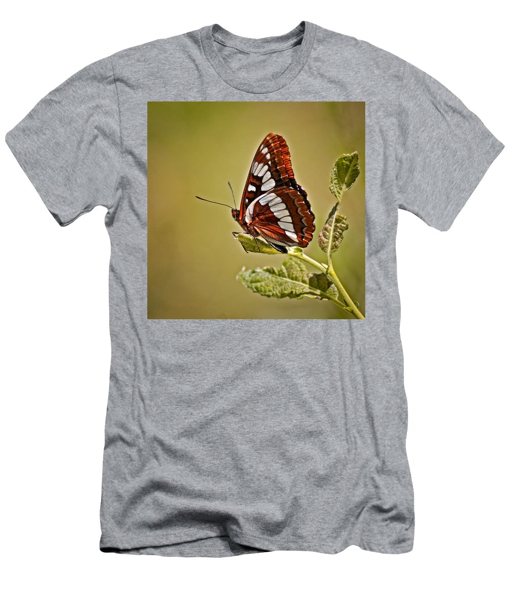 Bugs Men's T-Shirt (Athletic Fit) featuring the photograph The Butterfly by Ernie Echols
