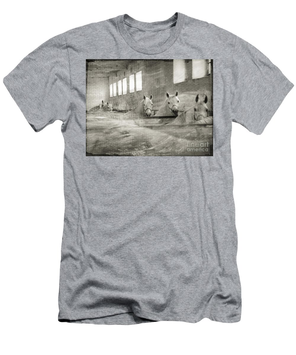 Grey Men's T-Shirt (Athletic Fit) featuring the photograph The Grey Mares by Angel Tarantella