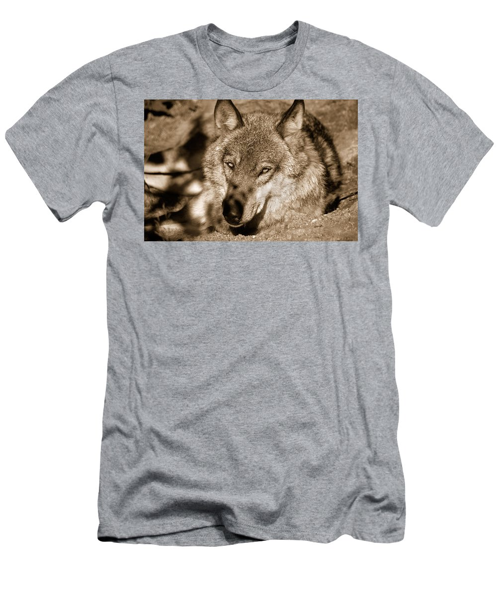 Wolf Men's T-Shirt (Athletic Fit) featuring the photograph The Grey by Roman Solar