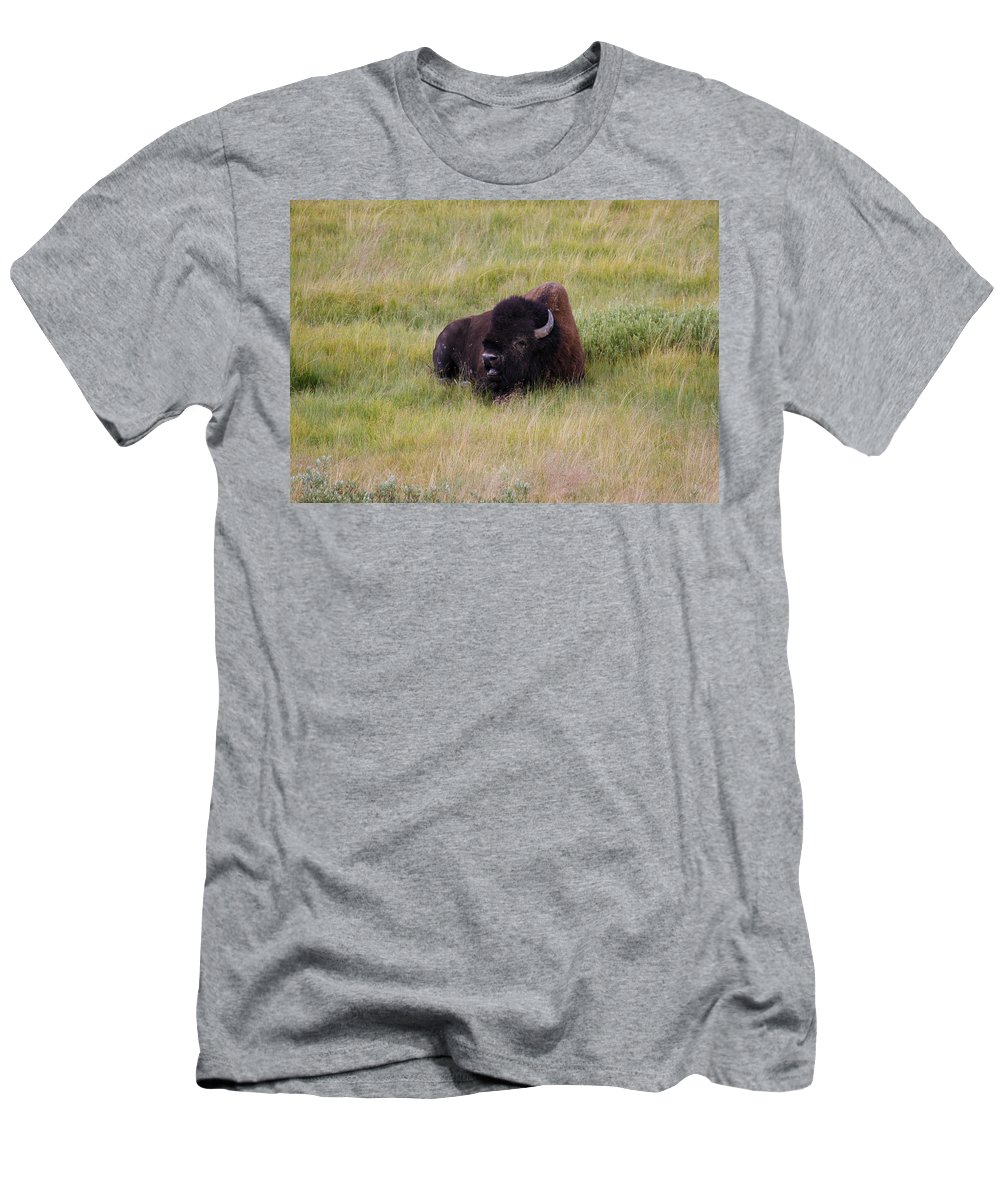Buffalo Men's T-Shirt (Athletic Fit) featuring the photograph The Old One by Steve McKinzie