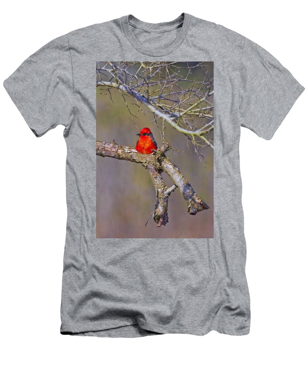 Vermilion Flycatcher Men's T-Shirt (Athletic Fit) featuring the photograph The Scarlet Letter by Gary Holmes