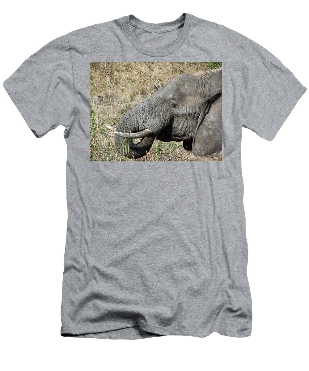 Elephant Bull Men's T-Shirt (Athletic Fit) featuring the photograph This Tastes Good by Douglas Barnard