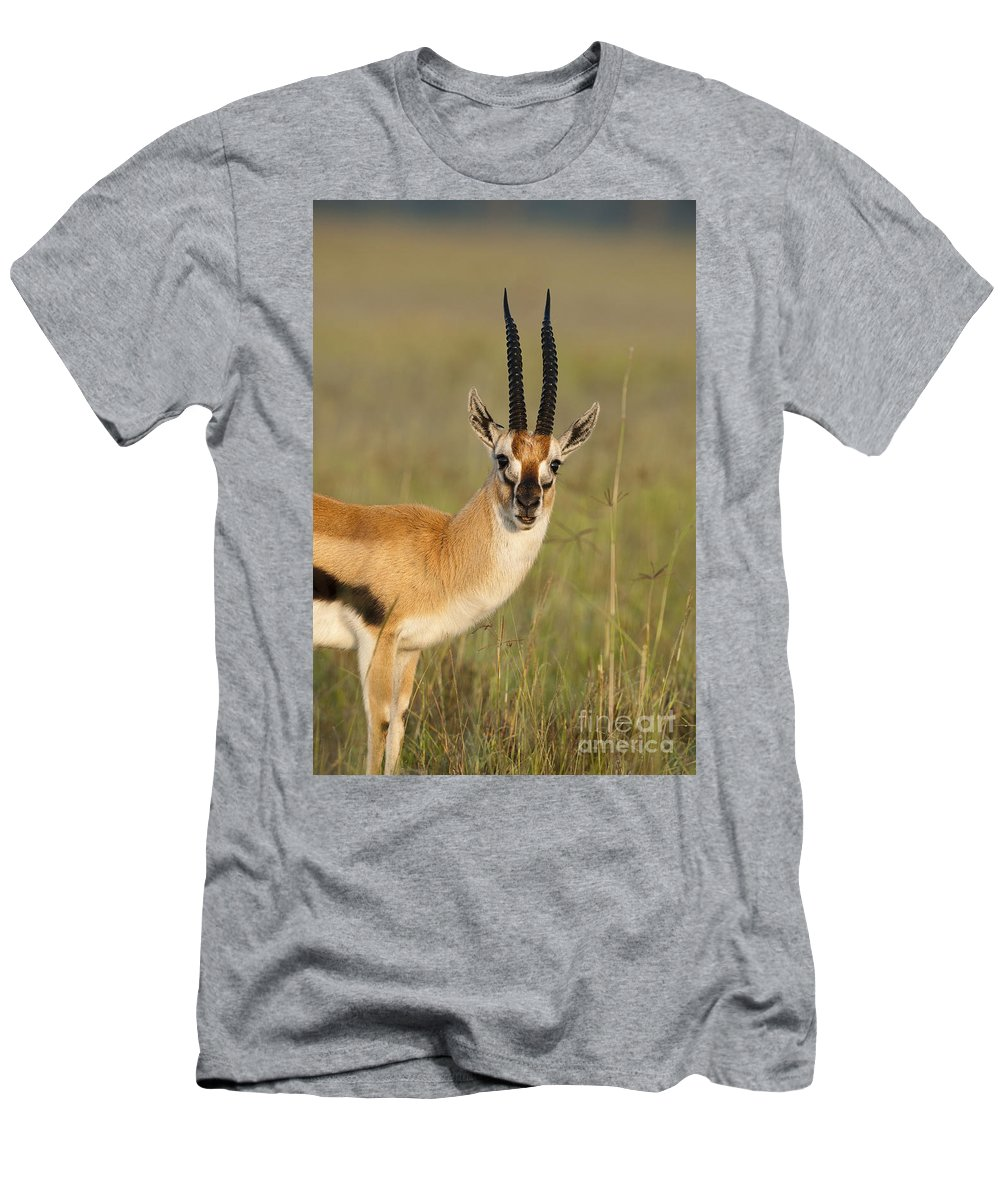 African Fauna Men's T-Shirt (Athletic Fit) featuring the photograph Thomsons Gazelle by John Shaw