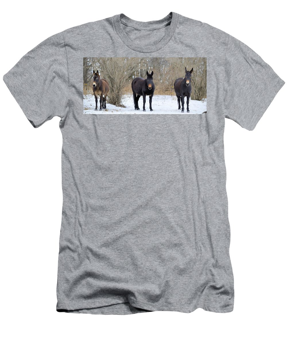 Mules Men's T-Shirt (Athletic Fit) featuring the photograph Three Amigos by Bonfire Photography