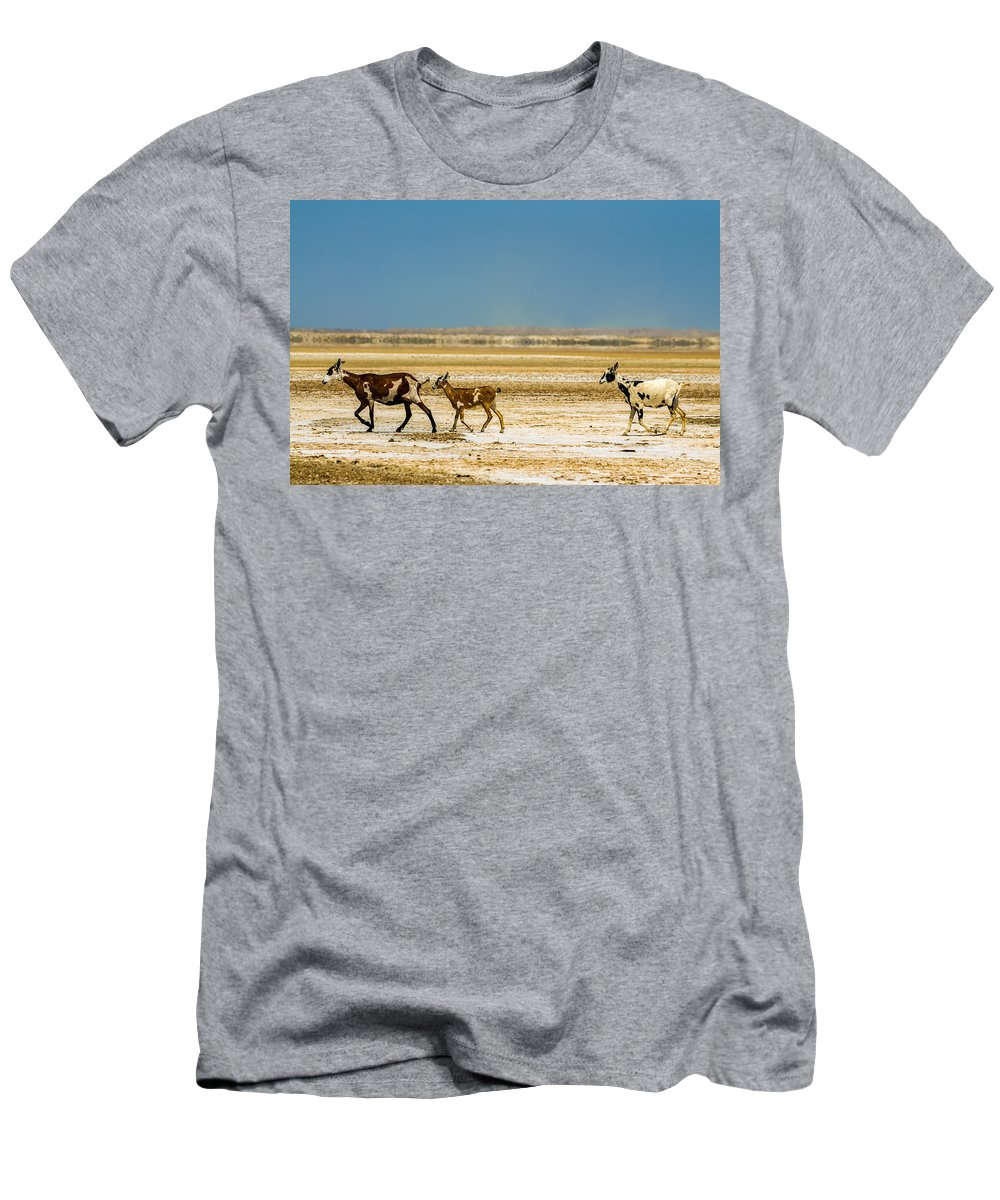 Goat Men's T-Shirt (Athletic Fit) featuring the photograph Three Goats In A Desert by Jess Kraft