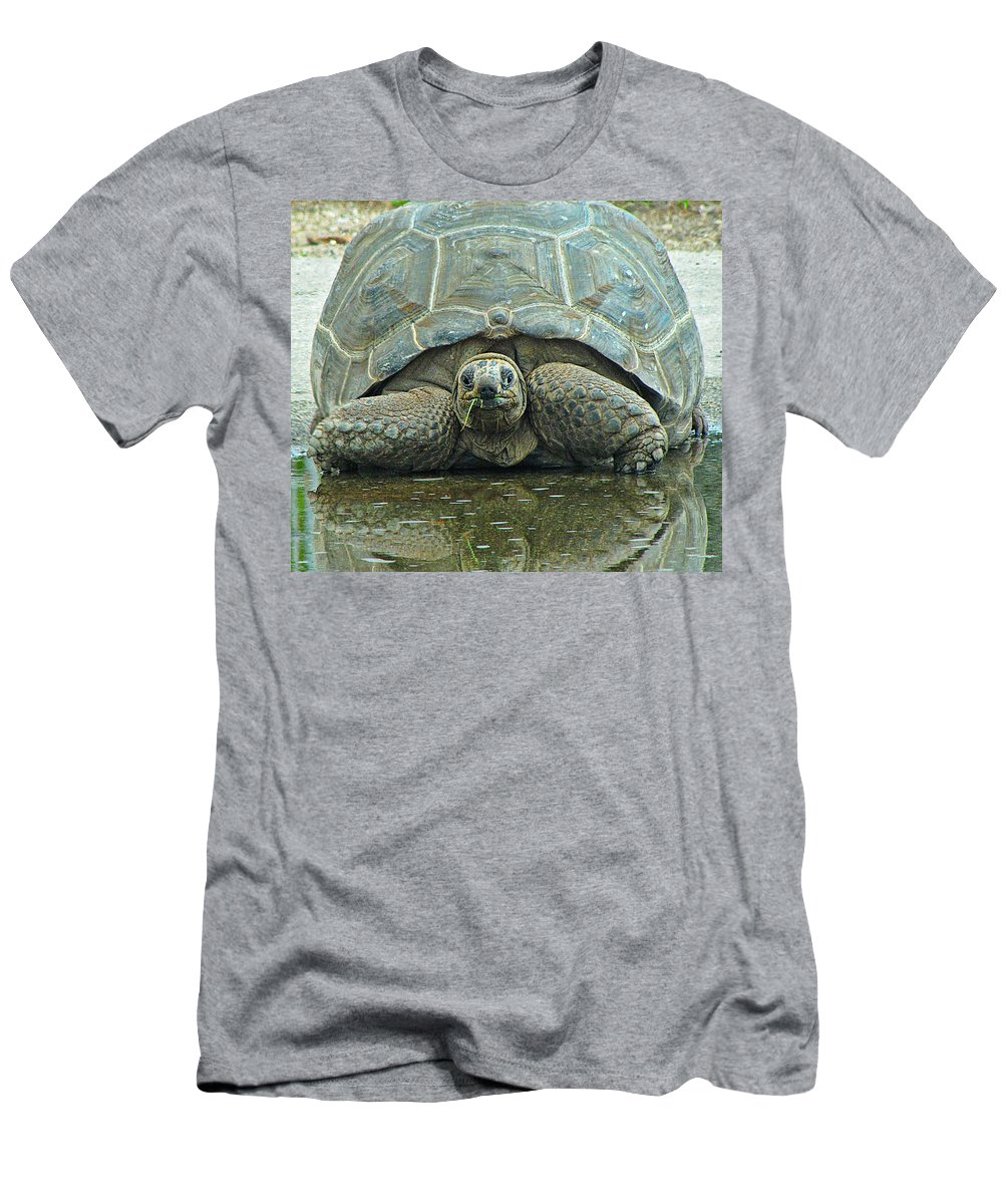 Tortoise Men's T-Shirt (Athletic Fit) featuring the photograph Tortoise by MTBobbins Photography