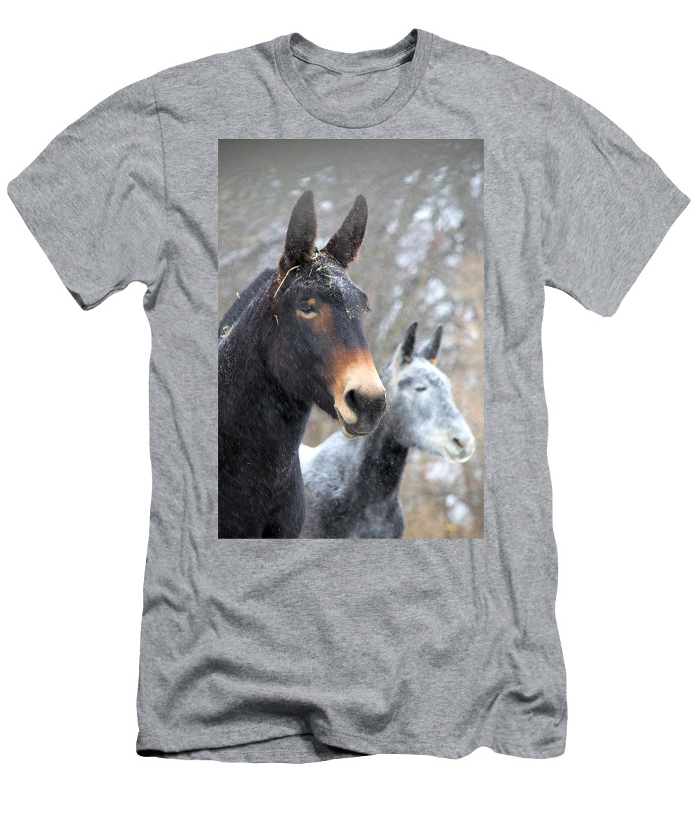 Mules Men's T-Shirt (Athletic Fit) featuring the photograph Two Mules For Sister Sara by Bonfire Photography