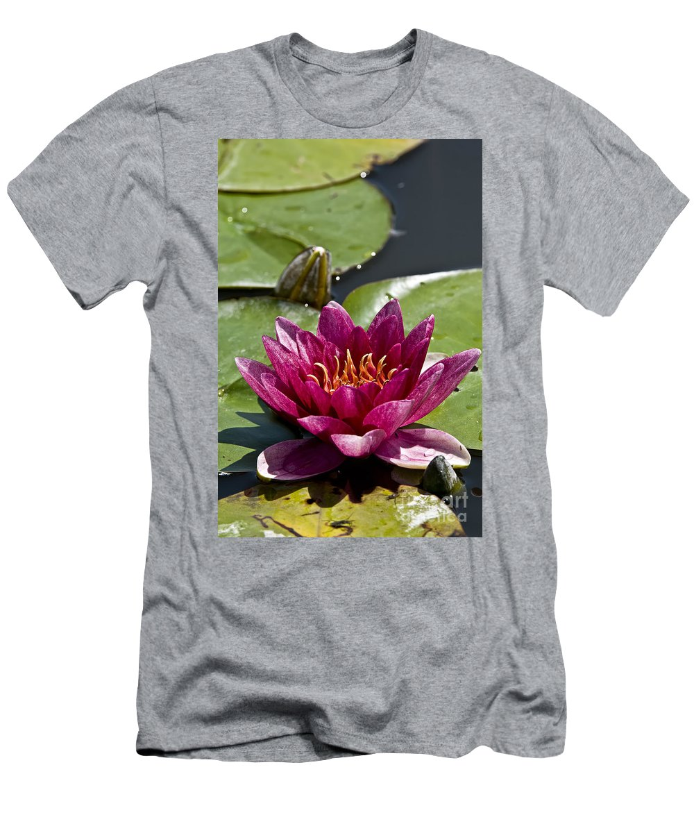 Water Lily Men's T-Shirt (Athletic Fit) featuring the photograph Water Lily Pictures 66 by World Wildlife Photography
