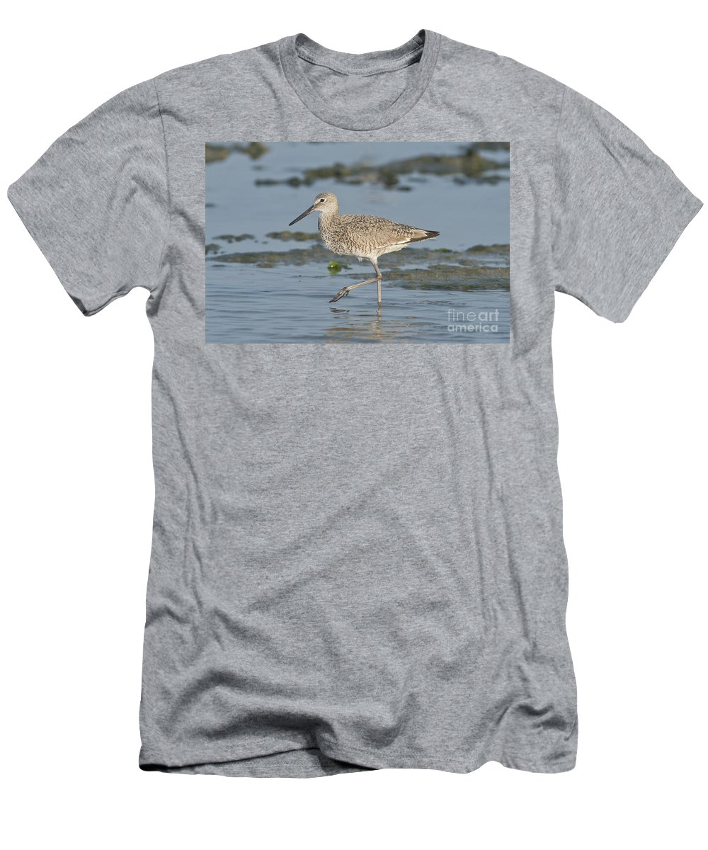 Willet Men's T-Shirt (Athletic Fit) featuring the photograph Willet by Anthony Mercieca