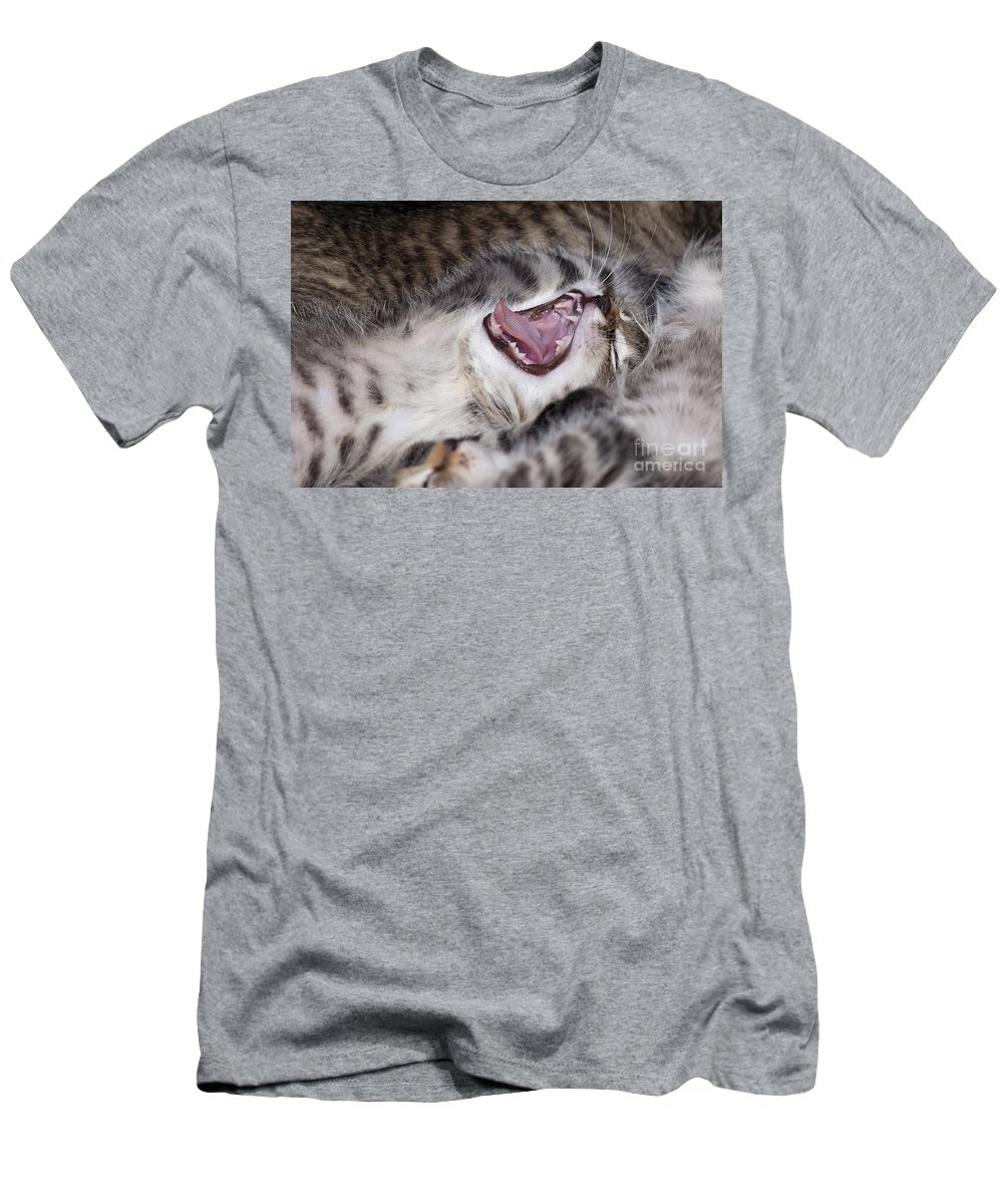 Animal Men's T-Shirt (Athletic Fit) featuring the photograph Yawning Kitten by Michal Boubin