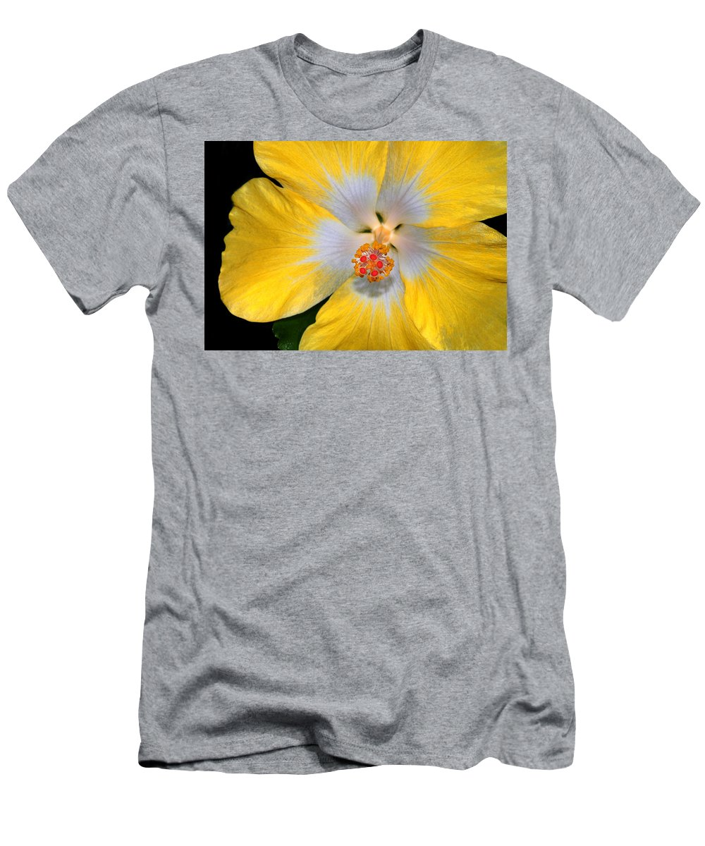 Hibiscus Men's T-Shirt (Athletic Fit) featuring the photograph Yellow And White Hibiscus by Dave Mills