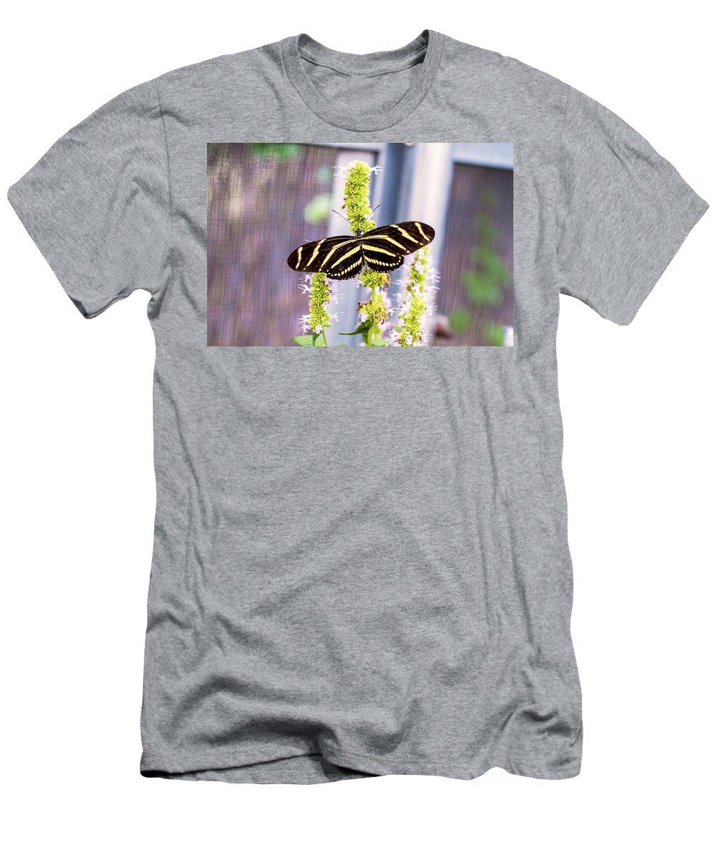 Nj Men's T-Shirt (Athletic Fit) featuring the photograph Zebra II by Pablo Rosales