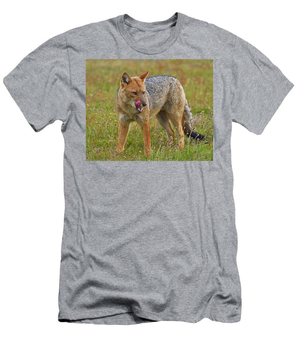 Culpeo fox t shirts