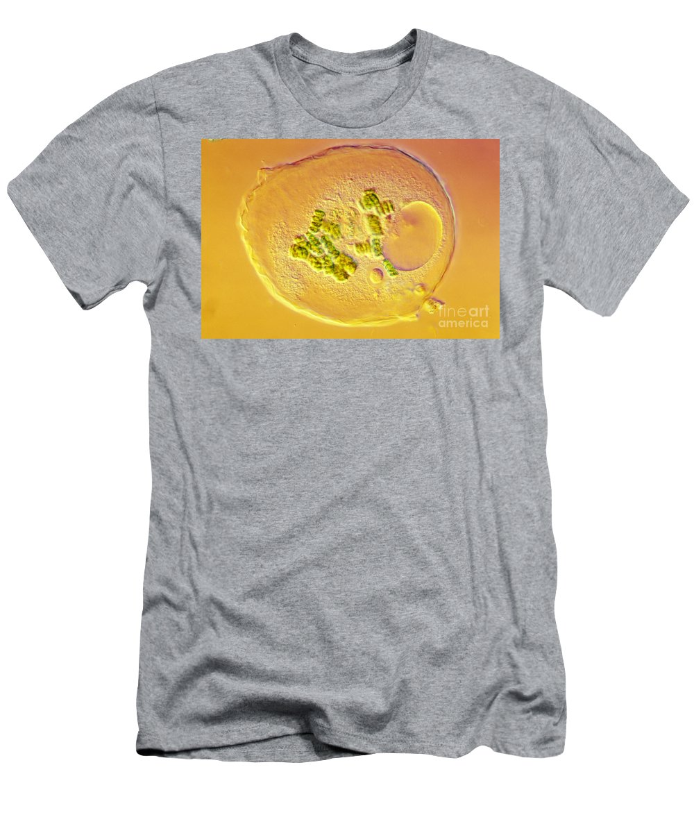 Amoeba Men's T-Shirt (Athletic Fit) featuring the photograph Amoeba Verrucosa by M. I. Walker