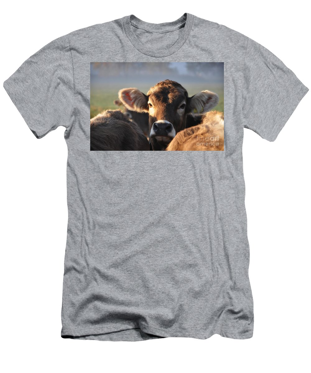 Cows Men's T-Shirt (Athletic Fit) featuring the photograph cow by Mats Silvan