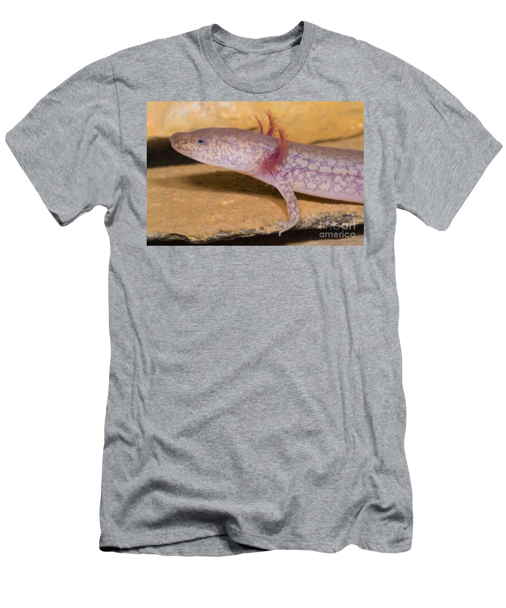 Gyrinophilus Subterraneus Men's T-Shirt (Athletic Fit) featuring the photograph West Virginia Spring Salamander by Dante Fenolio